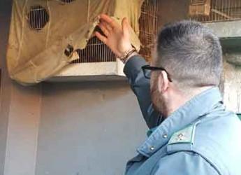 Coriano. Guardie Ecozoofile. Operazioni congiunta con la Polizia Provinciale a contrasto del bracconaggio.