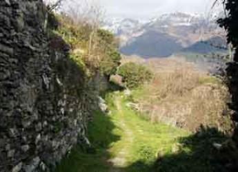 Imperia. Triora, 'il paese delle streghe' diventa simbolo degli alberi monumentali.