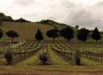 Ravenna. Vini di Romagna. L'Enoteca Baldovino ospita i vignaioli di Tenuta Casali e il maestro Gianfranco Camerani.