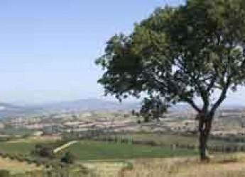 Italia. Toscana. Alla fiera del vino ProWein partecipa per la prima volta il Consorzio Tutela Vini della Maremma Toscana.