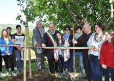 Roncofreddo. Campagna Hera 'Regala un albero alla tua città'. Inaugurata l'area verde di via don Minzoni.