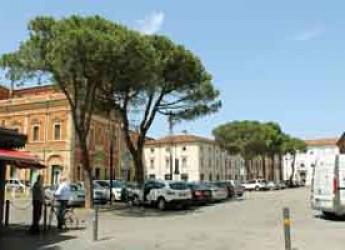 Lugo. I pini di piazza Trisi saranno sottoposti a controlli per verificare la stabilità.