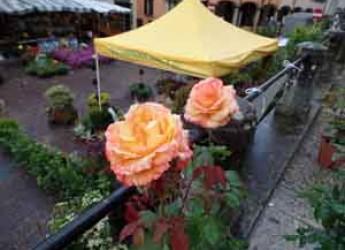 San Marino. Fiori che passione. La rosa di San Marino protagonista di Florea.