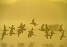 Cervia. A Musa le immagini suggestive del Parco del Delta del Po.