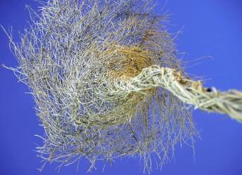 Cotignola. Floralia: workshop per la Land Art dell'Arena delle balle di paglia. . Iscrizioni entro il 30 giugno.