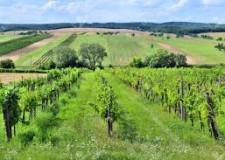Bologna. Agricoltura. Tramonto DiVino. Dal 25 luglio al 24 settembre.