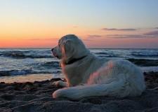 San Mauro Pascoli. Inaugurazione 'Fido d'amare': consentita la balneazione anche ai cani.