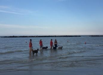 San Mauro Mare. Finalmente in acqua con il proprio cane: 'Fido d'amare'.