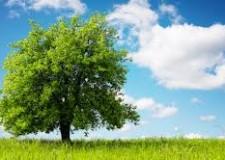 Santarcangelo. 'Regalo un albero alla tua città'. La bolletta online di Hera.