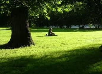 Cesena. Aree verdi: si interviene su oltre 170 ettari distribuiti in quasi 450 aree.