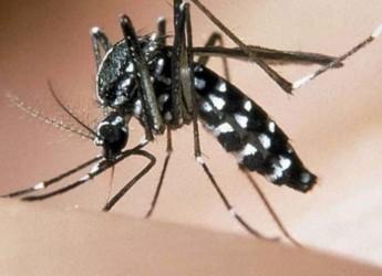 Zanzara tigre: aRavenna trattamenti contro le larve nelle zone allagate