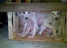 Tratti in salvo tre cuccioli di cane dalle Guardie Ecozoofile di Rimini