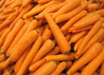 Arriva l'inverno e cavoli e carote sono preziosi alimenti della nostra dieta quotidiana. Scopriamone le proprietà