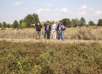 Il fitodepuratore di Santa Maria in Fabriago: quando la depurazione passa attraverso le piante