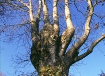 Unione: la Bassa Romagna partecipa alla Giornata nazionale degli alberi
