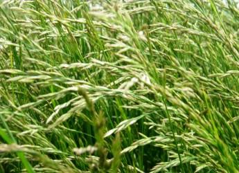 """Le piante possono andare in """"letargo"""". A scoprirlo un gruppo di ricercatori dell'Università di Pisa"""