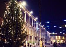 Emilia Romagna. Faenza: ' Giardini di Natale' al via ( sabato 10 dicembre, ore 16,palazzo Esposizioni).