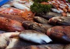 Ravennate. A scuola per meglio conoscere 'Il pesce del nostro mare '. Con tanti piatti da gustare.