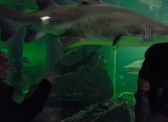 Lo squalo Brigitte dell'Acquario di Cattolica protagonista in un curioso Mannequin Challenge