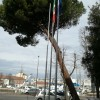 Emilia Romagna. Rimini: abbattuto pino domestico nel giardino della Capitaneria di porto.