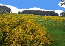Emilia Romagna. Un parco per il Monte Fumaiolo? Il 6 maggio a Cesena una giornata di studio.