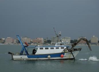 Emilia Romagna. Rimini: fondi  'fermo pesca' bloccati da due anni? Nessuna risposta dal Ministero.