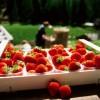 'Festa delle fragole' 2017. Sapore puro d'un frutto amato da grandi e piccoli, delizia della Val Martello.
