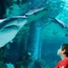 Cattolica. All'acquario, prima notte con gli squali. Conoscenza e gioco per un'avventura ( davvero) insolita.