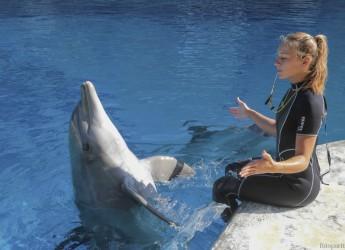 Riccione. Alla Festa di fine estate con i 54 anni di Pelè, la delfina più amata e longeva d'Europa.