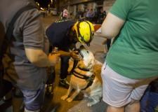 Forlì. Due giorni di esercitazioni per volontari del Servizio operativo di soccorso della Protezione civile.