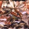Bellaria Igea Marina. Scegli il tuo cibo! Con cena degli auguri di Condotta ( giovedì 14 dicembre).