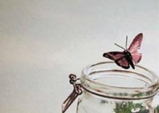 Bassa Romagna. 'Casa Monti' al centro giovanile ' Free to fly'. Per 'indagare'  tra  scienza e natura.