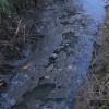 Rubicone. Schiuma ed acqua sporca nel Rio Salto. Per lo scarico acque di lavorazione ortaggi.