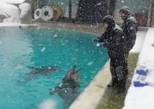 Cattolica. La neve sui parchi Costa della Riviera. Aquafan e i delfini di Oltremare  sorpresi dal Burian.