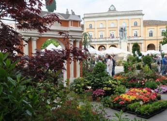 Santarcangelo d/R. Trenta candeline per 'Balconi fioriti'. Torna la festa dedicata ai fiori e al verde.