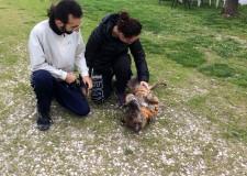 Rimini. Canile comunale: si chiude con le sei adozioni di cani 'nonnetti'  un mese davvero eccezionale.