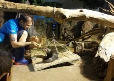 Cattolica. L'Acquario fa scuola. La cura degli animali in un wookshop sul benessere di squali e lontre.