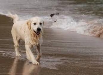 Ravenna.Cani in spiaggia: a Lido di Savio, area accessibile da sabato 4 agosto a domenica 30 settembre.
