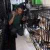 Rimini. Traffico di cani intercettato in A14 dalle Guardie zoofile. Furgone con 40 animali tra cani e gatti.