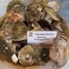 Ausl Romagna. Funghi spontanei: in tre all'ospedale. Opportuno cuocere sempre ' molto bene' i funghi.