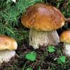 Lugo. Alle Pescherie della Rocca, la 36a edizione della Mostra del fungo.