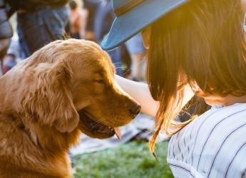 Ravenna. Attualità: testamento a favore degli animali. Cosa succede quando il padrone scompare?