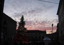 Ravenna. Natale è nell' aria. Nel salotto di piazza del Popolo, il grande albero arrivato dalla Campigna.