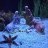 Cattolica. All'Acquario i 'Presepi sommersi'. Natività in terracotta e ceramica sul fondo del mare.