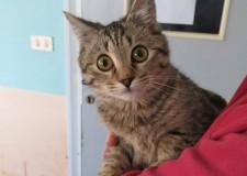 Rimini. Con la Befana, raccolta fondi al canile 'Cerni' per ridare al gatto 'Bolle' l'uso delle sue zampette.