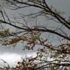 Rimini. Bilancio maltempo. Forte vento nella notte di lunedì 25, sei alberi abbattuti dalle raffiche.