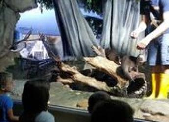 Cattolica. All'Acquario sono ' I giorni della lontra'. Pubblico protagonista  e con possibili divertenti selfie.
