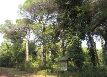 Ravenna. Lidi Nord, tre grandi eventi  alla scoperta dell'ambiente naturalistico delle valli e delle pinete.