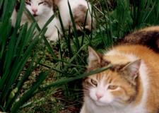 Rimini. Canile 'Cerni', gatti  senza padrone. Da giugno ospitati ben 46 felini, di cui 33 già affidati.