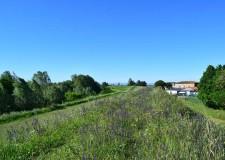 Giovecca di Lugo. Alla scoperta della natura. Al parco 'Gea – Il giardino del tempo'. In occasione di 'Vivi il verde'.